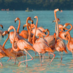 Route des Flamants roses