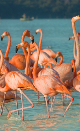 Laat de Roze Flamingo je hart stelen
