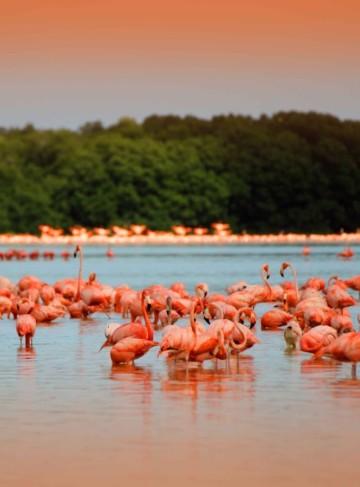 https://yucatan.travel/wp-content/uploads/2019/11/rio-de-los-flamingos-celestun-yucatan-360x487.jpg