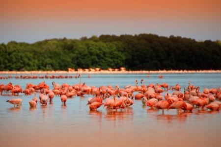 https://yucatan.travel/wp-content/uploads/2019/11/rio-de-los-flamingos-celestun-yucatan-450x300.jpg