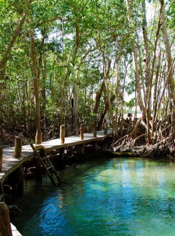 https://yucatan.travel/wp-content/uploads/2019/12/Celestun-054-360x487.jpg