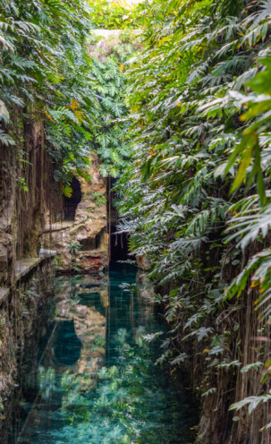 Cenote y Hacienda Mucuyché