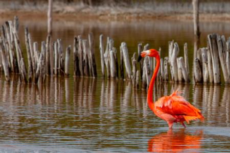 https://yucatan.travel/wp-content/uploads/2020/03/RivieraYucat-n-Fauna-Flamingo-Telchac-Manglares-02-450x300.jpg