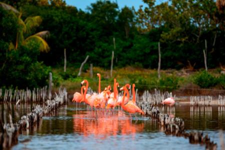 https://yucatan.travel/wp-content/uploads/2020/03/RivieraYucat-n-Fauna-Flamingos-DzilamdeBravo-01-450x300.jpg
