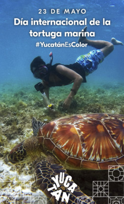 Día Internacional de la Tortuga Marina
